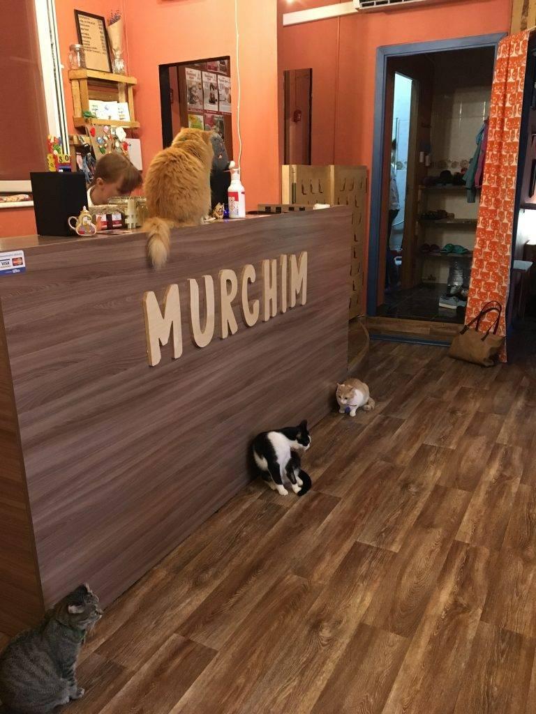 Котокафе - кафе для гостей, дом для котов
