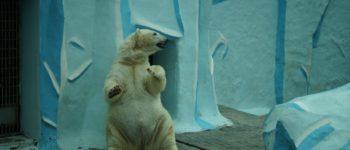 Обычный выходной.Новосибирский зоопарк.