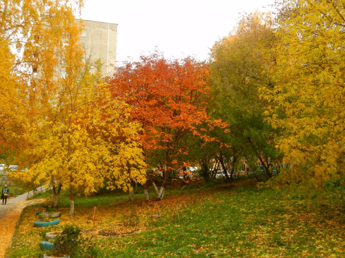 Осенняя природа - игра ярких красок
